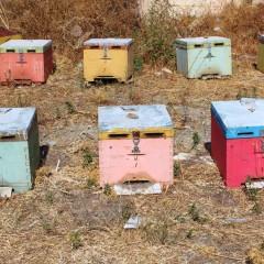 Quelques ruches en Crète